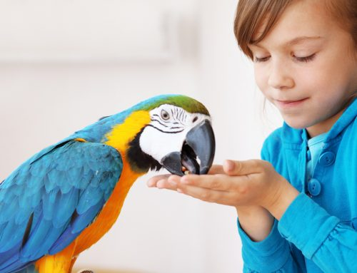 Caring for your Exotic Pet
