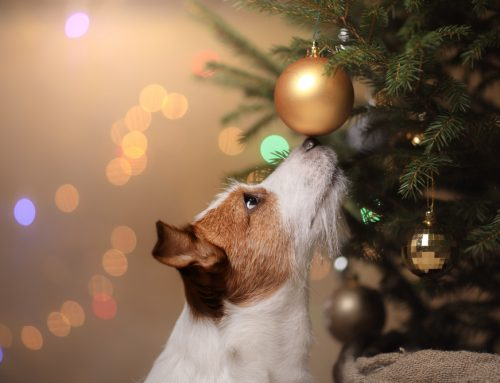How to Pet-Proof Your Home for the Holidays