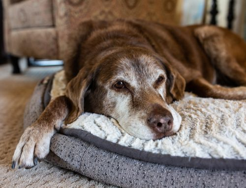 Helping Your Senior Pet Age with Grace