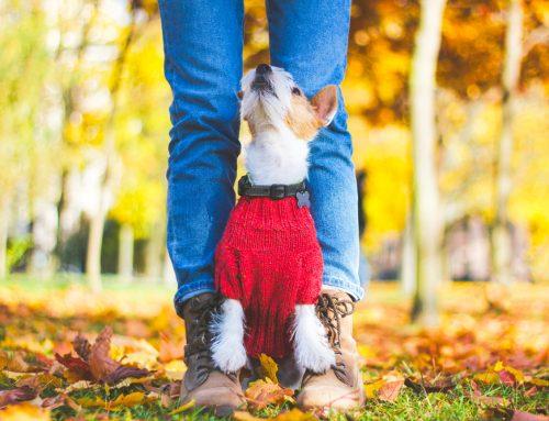 7 Mystifying Dog Behaviors Explained
