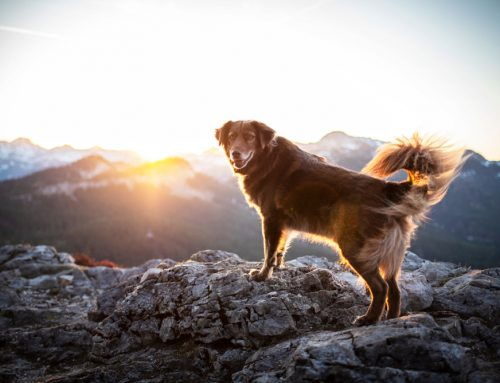 Our Answers to 6 Questions About Pet Safety While Camping and Hiking