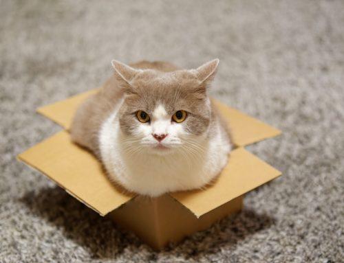 10 Quirky Cat Behaviors Clarified