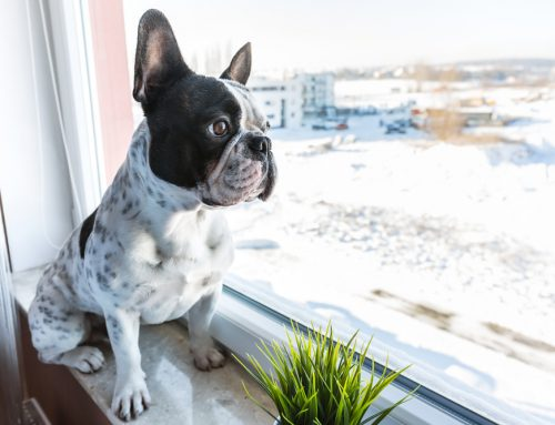Do's and Don'ts to Help Manage Your Pet's Separation Anxiety