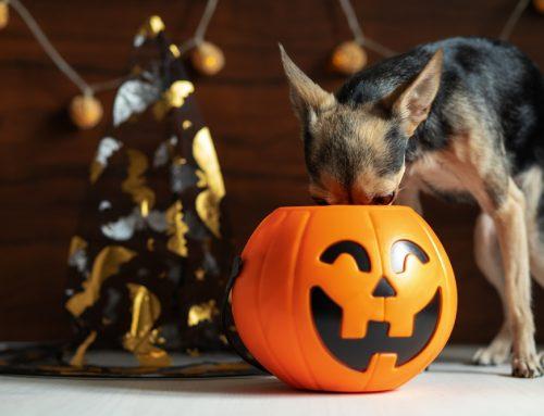 Bone Up on Pet-Safe Halloween Treats